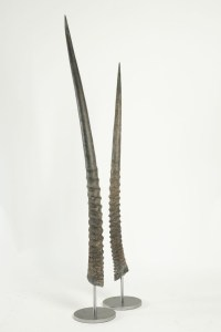 Pair of African Antelope horns mounted on base of stainless steel.