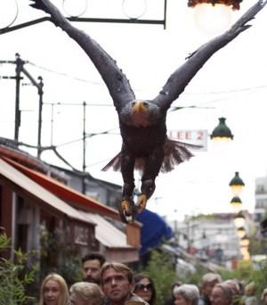 Vols et démonstrations d'oiseaux au Marché Biron