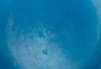 Vase « Acanthes » verre bleu électrique de René LALIQUE